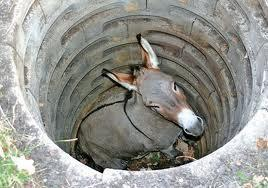 A Donkey In A Hole