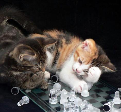 cats_smart_book2
