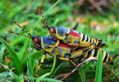 grasshopppers_GiantsCameAndTookThem